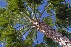 Palm treetop Stock Photos