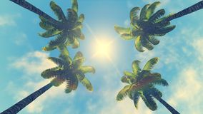 Palm treetops and sun at its zenith Royalty Free Stock Image
