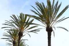 Palm Tress All Around Stock Afbeeldingen