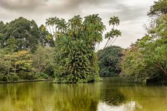 Palm Tress Island On Swan Lake In Singapore Botanical Gardens. Royalty Free Stock Photography