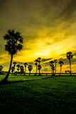 Palm tress. Palm trees in Long Xuyen, Angiang, VietNam Stock Images