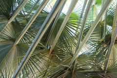 Palm a tropical background Stock Photo