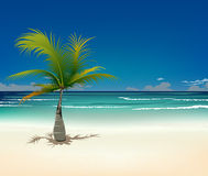 Palm and tropical beach Stock Photos