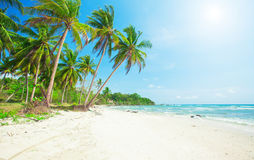 Palm and tropical beach Stock Image