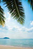 Palm and tropical beach Royalty Free Stock Photo