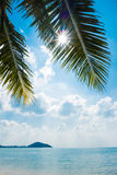 Palm and tropical beach Stock Images
