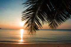 Palm and tropical beach Royalty Free Stock Photography