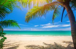 Palm and tropical beach. This is Palm and tropical beach stock photos