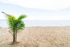 Palm and tropical beach at Pattaya in Thailand Royalty Free Stock Photos