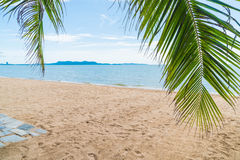 Palm and tropical beach at Pattaya in Thailand Royalty Free Stock Images