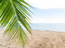 Palm and tropical beach at Pattaya in Thailand Royalty Free Stock Photo