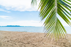 Palm and tropical beach at Pattaya in Thailand Stock Photos