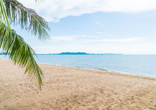 Palm and tropical beach at Pattaya in Thailand Royalty Free Stock Image