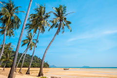 Palm and tropical beach Phi phi island Thailand. Paradise palm and tropical beach Phi phi island Thailand Royalty Free Stock Image