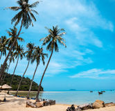 Palm and tropical beach Phi phi island Thailand. Paradise palm and tropical beach Phi phi island Thailand Stock Images