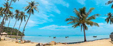 Palm and tropical beach Phi phi island Thailand Stock Image
