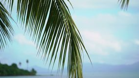 Palm on tropical beach. At sunny day stock video footage