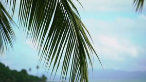 Palm on tropical beach. At sunny day stock footage