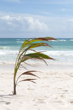 Palm and tropical beach Royalty Free Stock Images