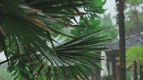 Palm at tropical downpour stock video