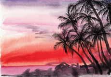 Palm tropical sunset Royalty Free Stock Images