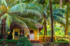 Palm in Tropical tourist resort. Royalty Free Stock Photography