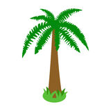 Palm tropical tree icon, isometric 3d style Royalty Free Stock Photos