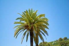 The Palm Stock Photos