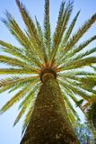 The Palm Royalty Free Stock Photos