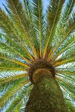 The Palm Stock Photo