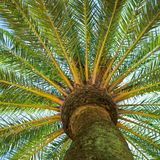 The Palm Royalty Free Stock Images
