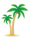 Palm tropical tree vector illustration Royalty Free Stock Images