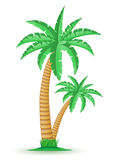 Palm tropical tree vector illustration Royalty Free Stock Photo