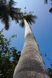 Palm. Tropisch bos. Het Park van Tayrona. Colombia Royalty-vrije Stock Foto