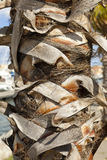 Palm trunk Royalty Free Stock Photos