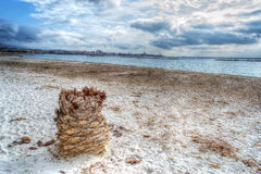 Palm trunk in Alghero shore. Hdr effect. Stock Photos