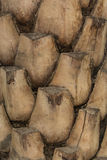 Palm trunk. Close up of palm trunk detail Royalty Free Stock Photo
