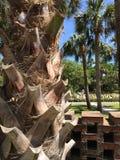 Palm trunk closeup. brick fence. stock photo