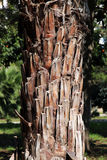 Palm trunk. Detailed view of a palm trunk, portrait cut Royalty Free Stock Images
