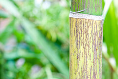 Palm trunk. The pattern of palm trunk Royalty Free Stock Photo