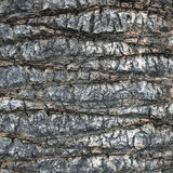 Palm trunk royalty free stock image