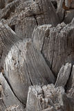 Palm trunk texture Stock Images