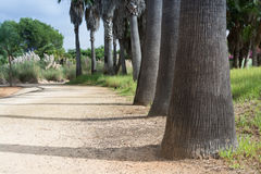 Palm trunks and gravel pathway Stock Photos