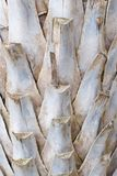 Palm trunks texture deail Stock Images