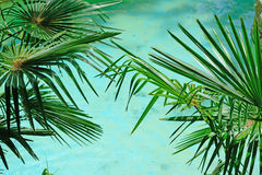 Palm by turquoise water Stock Photo