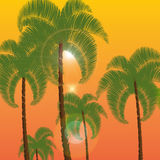 Palm in two rows, a bottom view. Against the background of orange sunset, sunrise. illustration Royalty Free Stock Image