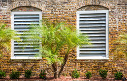 Palm and Two White Windows Royalty Free Stock Photography