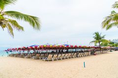 Palm with umbrella and chair on beach Royalty Free Stock Photos