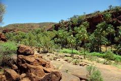 Palm Valley, Australia Royalty Free Stock Photo