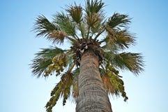 Palm van de man perspectiefhemel als achtergrond Royalty-vrije Stock Foto's